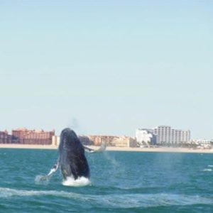 Boating Puerto Penasco - Whale Watching